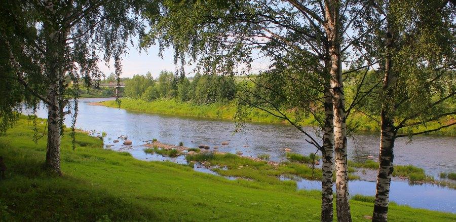 Обычный пейзаж средней полосы России с берёзами и мелководной рекой.