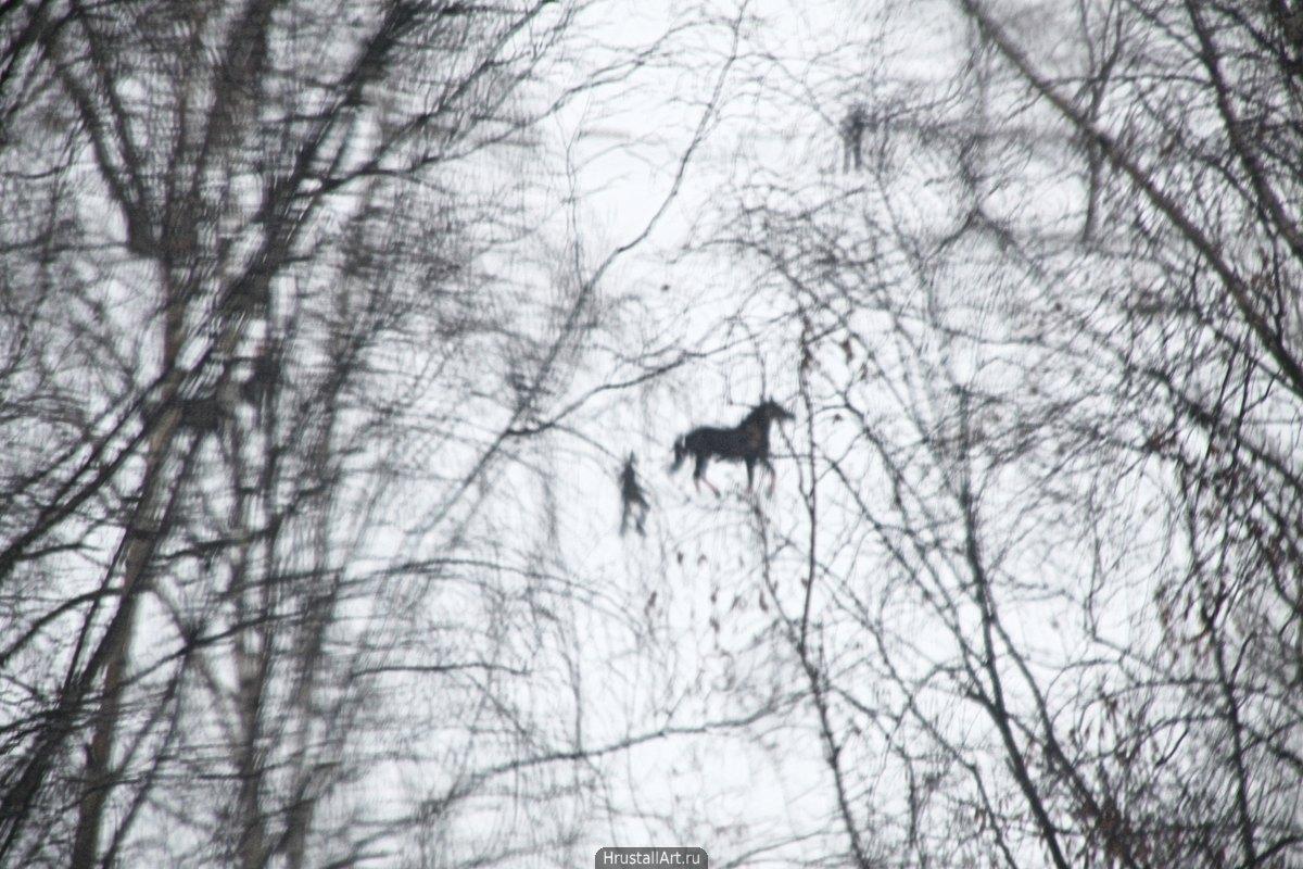 Прогулка с конём
