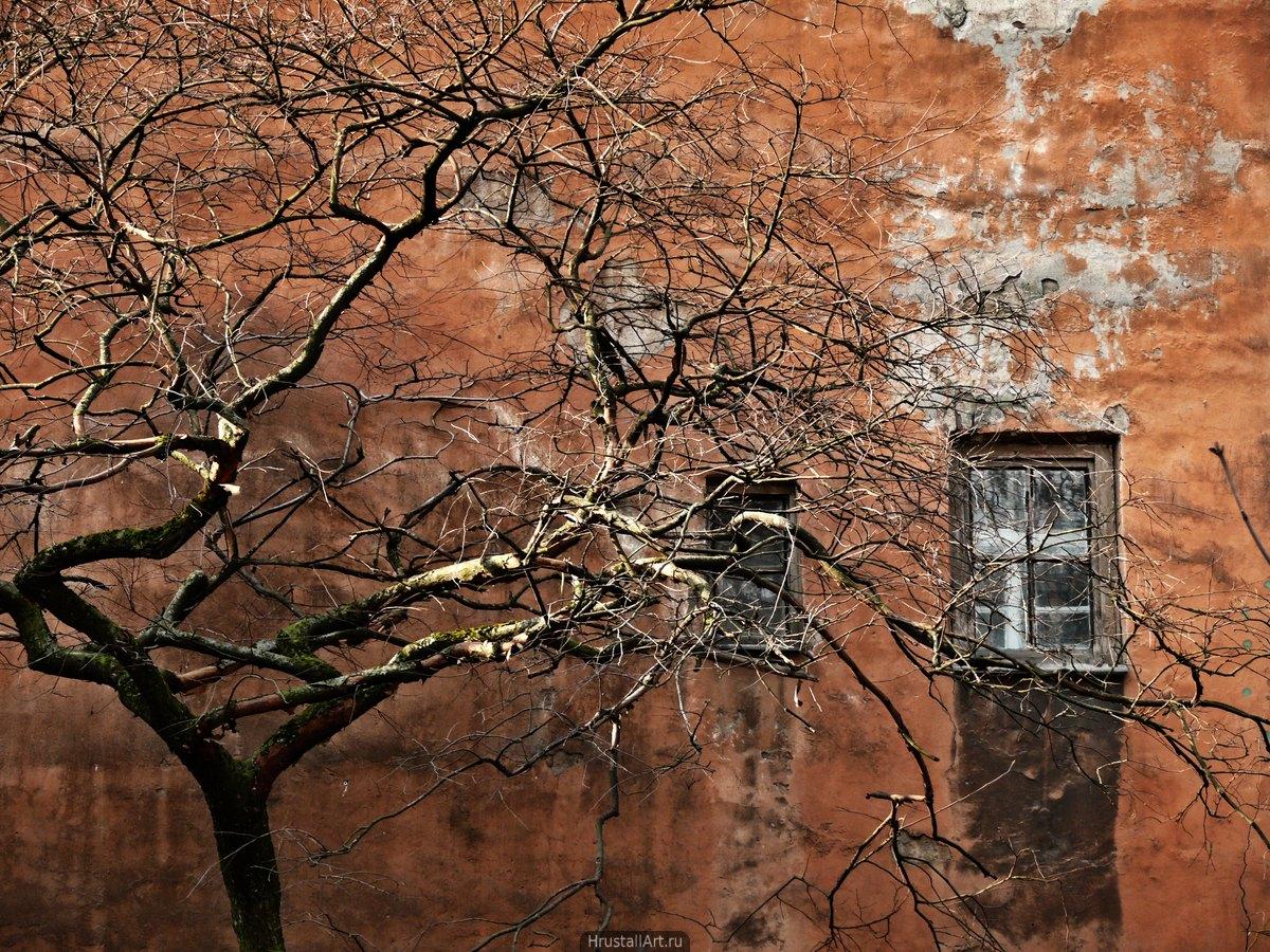 Рыжая стена