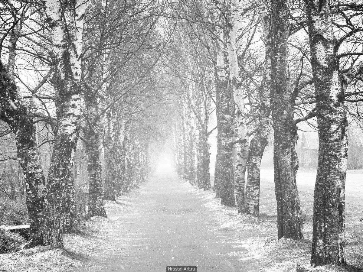 Берёзовая аллея в снегу